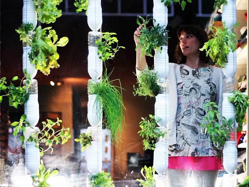 Britta Riley: A garden in my apartment | TED Talk