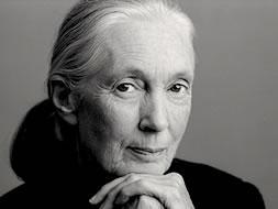 Jane Goodall   Speaker   TED.com