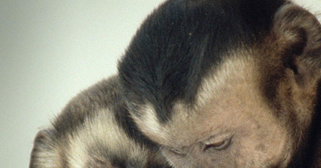 Frans de Waal: Comportamiento moral en los animales