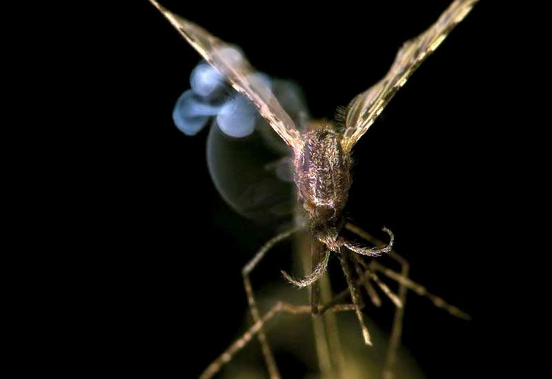 Could this laser zap malaria?