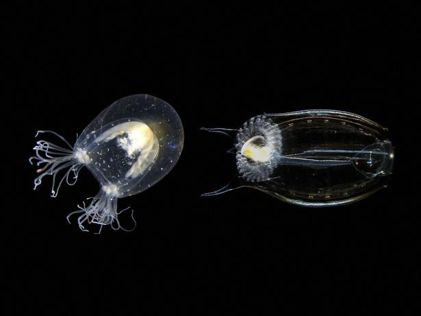 To solve old problems, study new species | Alejandro Sánchez Alvarado