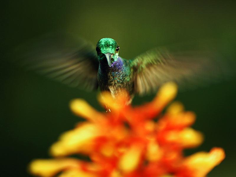 The hidden beauty of pollination