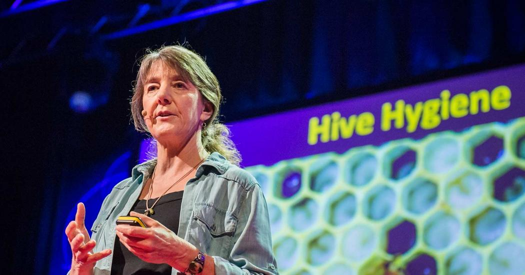 Marla spivak why bees are disappearing ted talk sciox Choice Image