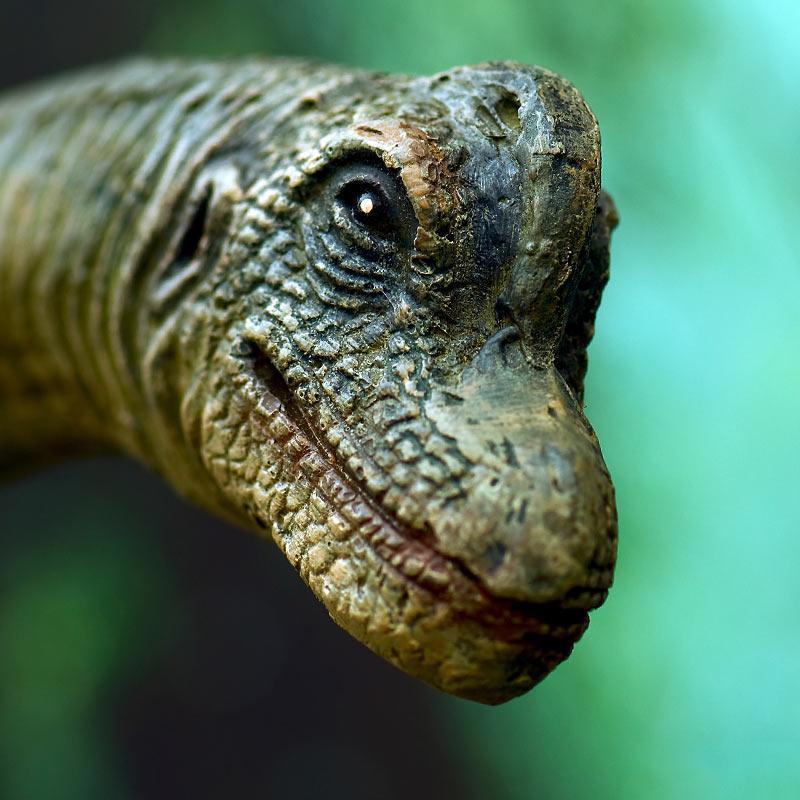 video playlists about evolution