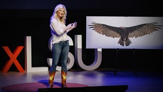 How vultures can help solve crimes