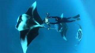 در دنیای یک عکاس اقیانوس غوطهور شوید