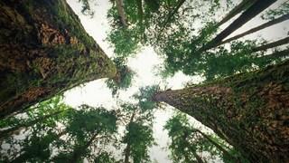 درختها چگونه با هم حرف میزنند
