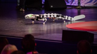 A robot that runs and swims like a salamander