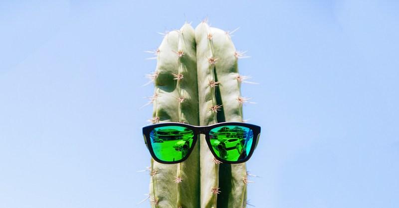 the secret lives of plants ted talks