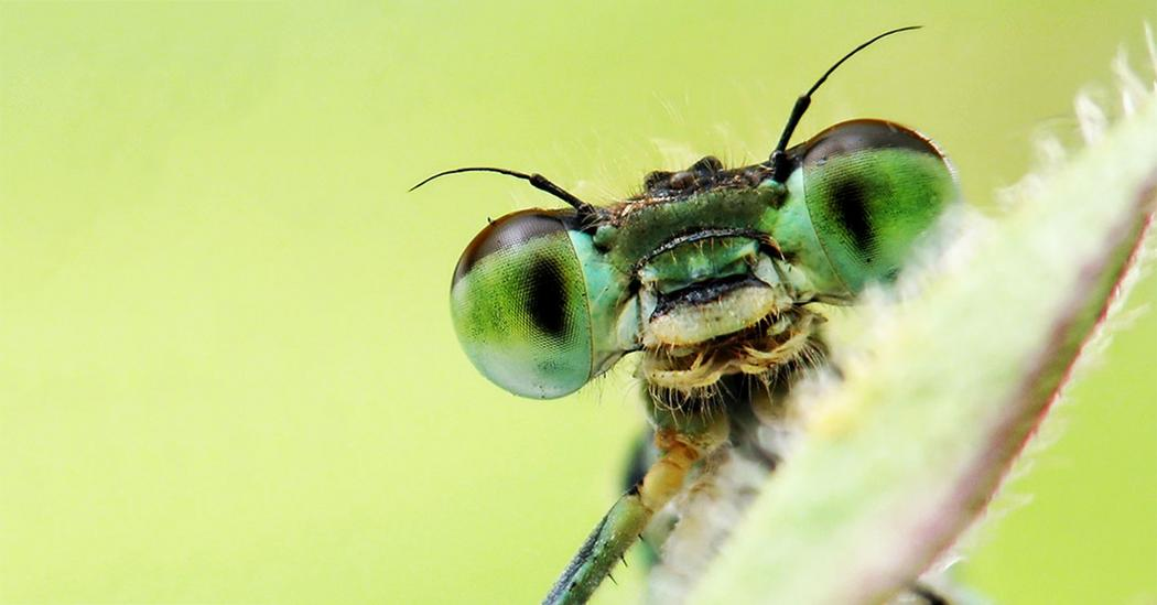 ideas about insects