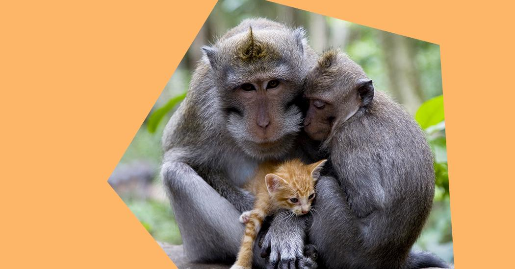 7 unexpected lessons from the animal world