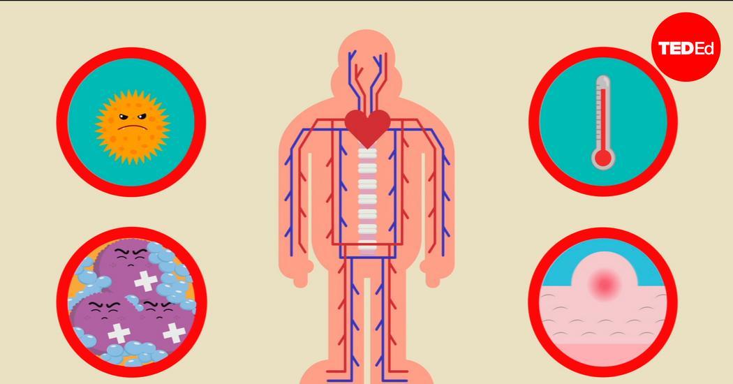 baktérium, amely megtámadja a csontokat)