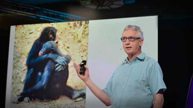 The surprising science of alpha males | Frans de Waal