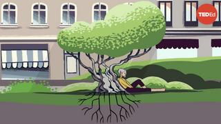 ステファン・アル都市の木をすべて切るとどうなるのか