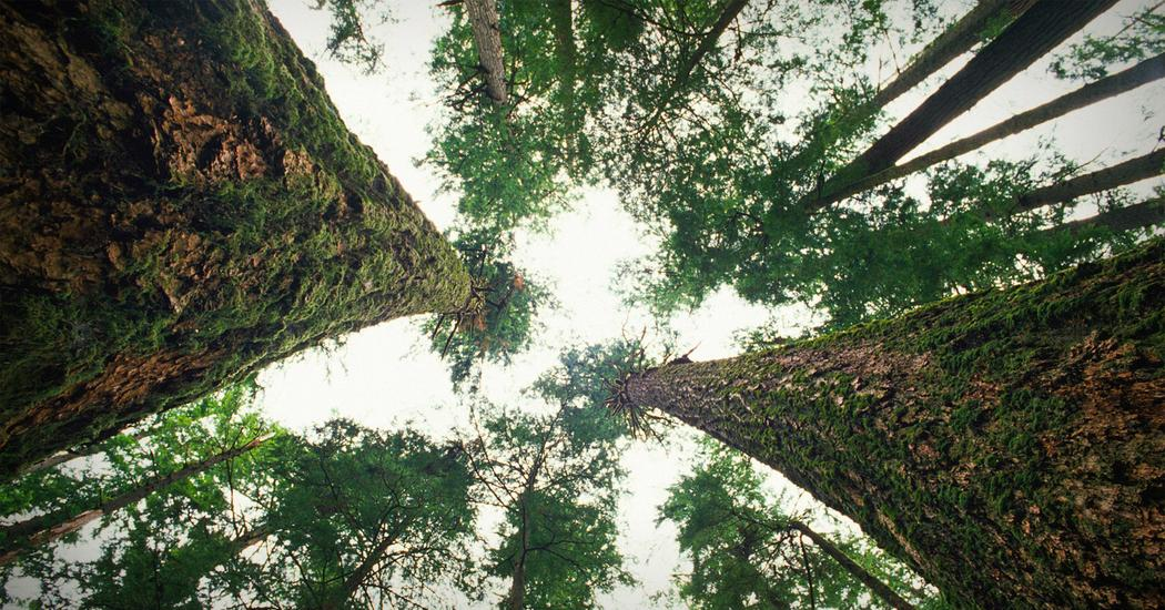 Suzanne Simard: How trees talk to each other | TED Talk