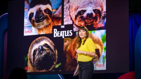 Sloths! The strange life of the world's slowest mammal   Lucy Cooke
