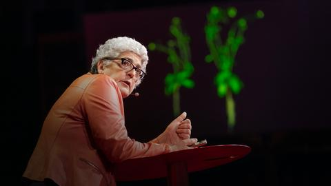 How supercharged plants could slow climate change   Joanne Chory
