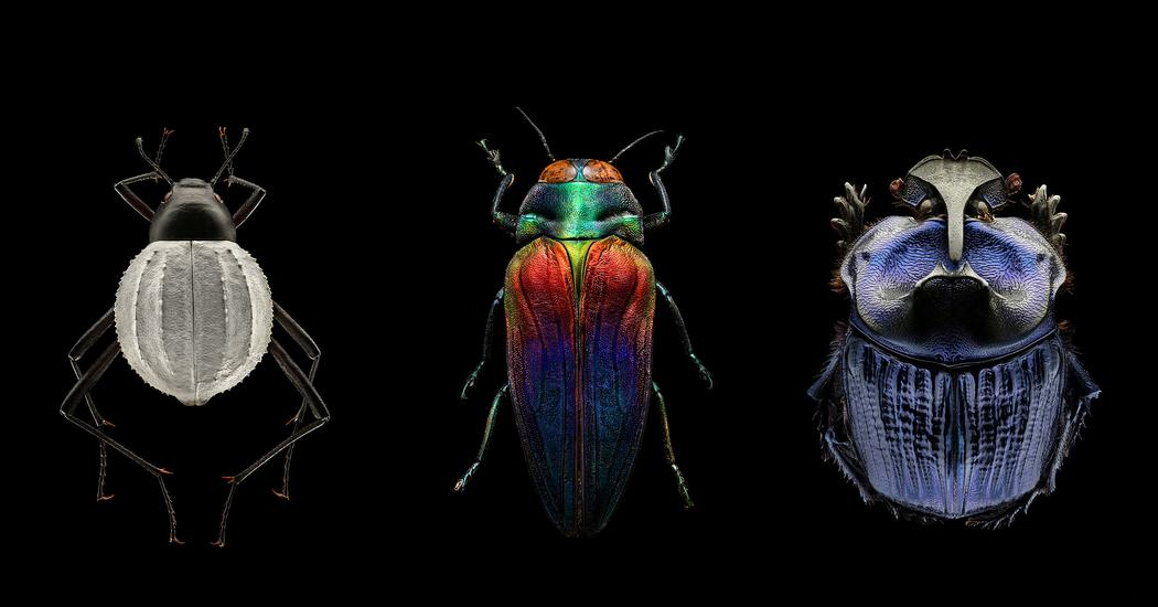 Mind-blowing, magnified portraits of insects