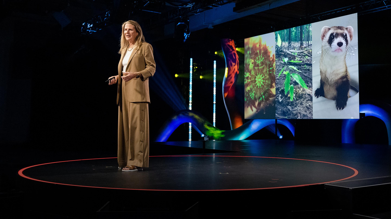 The genetic rescue of Earth's endangered species | Ryan Phelan